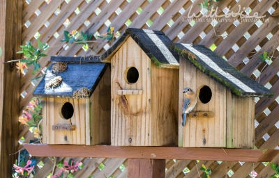 Eastern Bluebird Nest Boxes