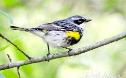 Words and Birds of Encouragement:Overcomer