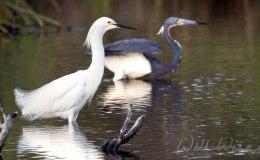 Words and Birds of Encouragement: HabitatRestoration