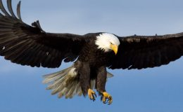 Eagles Wings – From CreationMoments