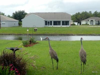 Three species from our door 05-16-20