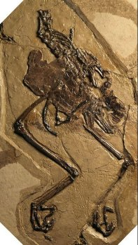 Fossil-Avimaia Schweitzerae With Unlaid Egg ©WikiC