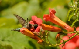 How Much Are You Being Monitored?  A HummingbirdLesson