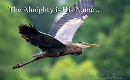 Almighty is HisName