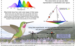 Hummingbirds See Colors Over (Beyond) theRainbow