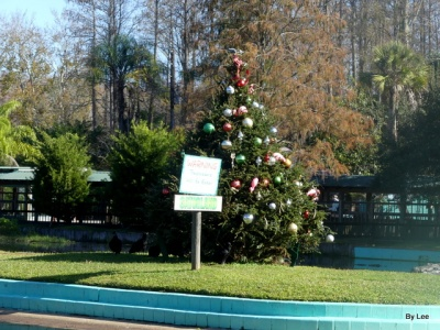 Christmas Tree and Sign - Gatorland 123020 by Lee