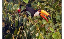 Ian's Irregular Bird – TocoToucan